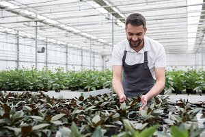 Smiling young bearded man standing in greenhouse