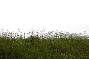 Green Grass Vegetation