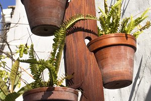 Ferns pots hanging on a wood