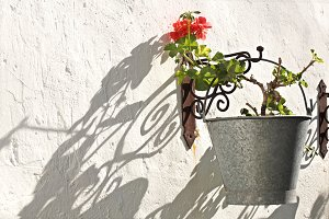 Shadow of a geranium