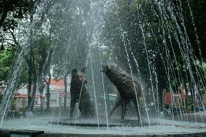 coyote fountain