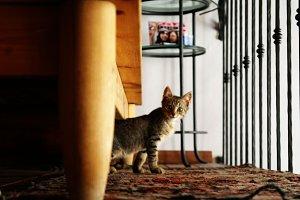 Curious kitten staring