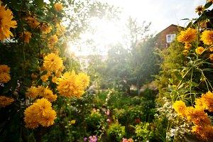 Beautiful garden with yellow peony