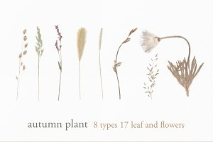 real autumn plant set