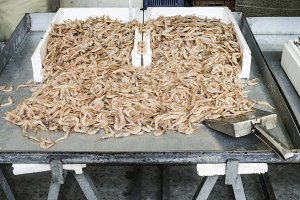 Shrimp on ice in the market