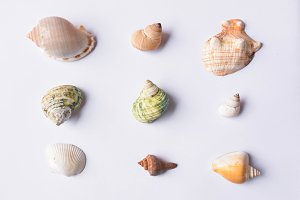 Group of shell