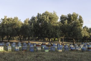 Colorful beehives. Panoramic