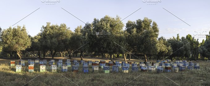 Colorful beehives. Panoramic - Industrial