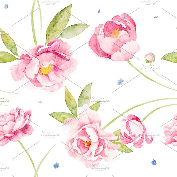 Peony Rose Ans Bindweed Watercolor