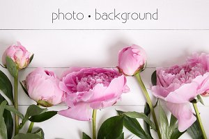 Pink Peonies Stock Photo, Background