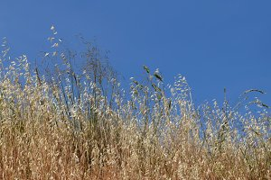 Summer Dry Plants