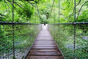 Bridge to the jungle