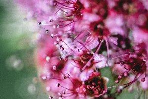 The Garden Whisper