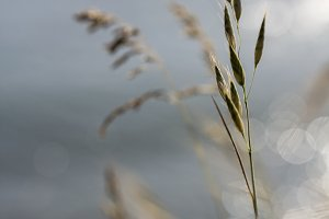Grass Heads and Bokeh
