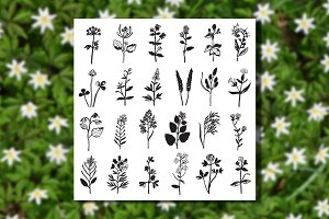 Herbal Set + 2 Seamless Patterns