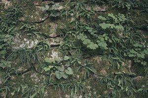 Green mossy wall background from the