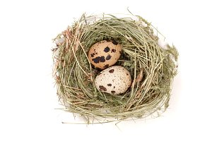 Two quail eggs in a nest isolated on white background. Top view