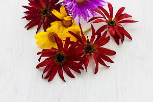 red white and yellow flowers