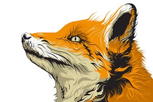 Fox Detail Illustration Artwork