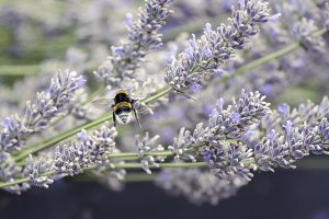 The flight of the bumblebee -2