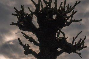Dead tree / mystic