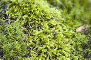 Nature texture - moss
