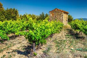 Vineyard with stone farmhouse