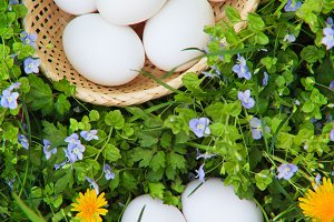Eggs on grass