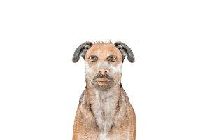 Dog with Man Head