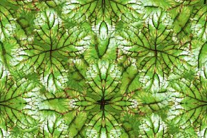 Stylized Nature Seamless Pattern Design
