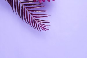Burgundy branches of palm