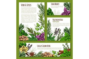 Herb, spice, leaf vegetable sketch banner template
