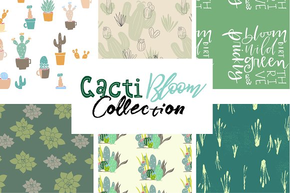 Cacti Bloom Collection