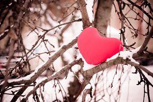 Red heart on snow tree