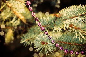Decored fir-tree branch