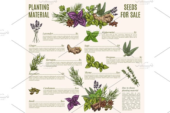 Herb And Spice Poster Template For Organic Shop Design