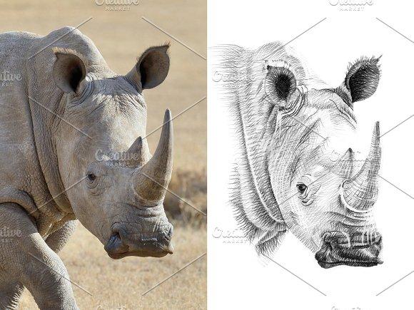 Hippo portrait drawn pencil in Illustrations