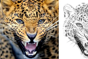 Leopard portrait drawn pencil