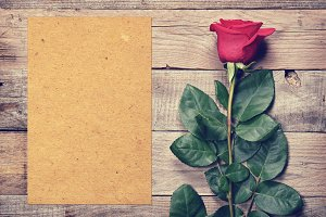 Vintage rose and blank paper