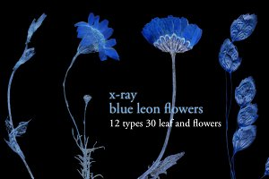 x-ray blue leon flower set
