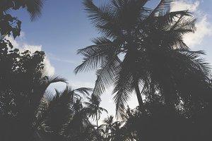 Tropical summer palm tree