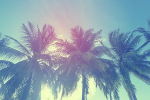 Tropical summer palm tree