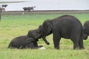 Elephant Play 3