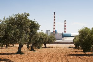 Olive trees and factory