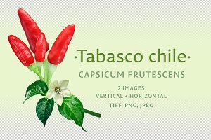 Tabasco chile