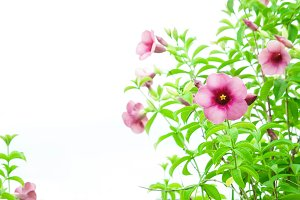 flowers plant on white background