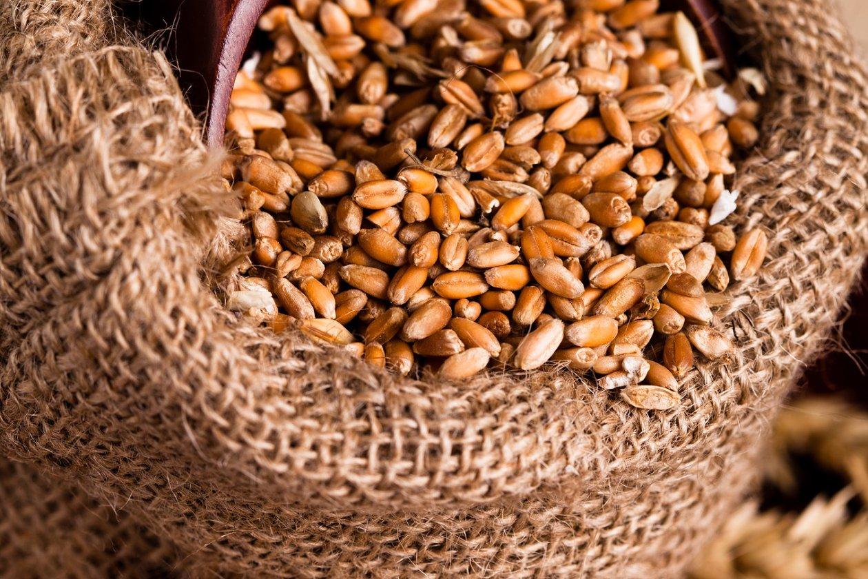 wheat sacks - HD1260×840