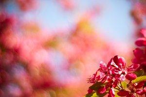 Bokeh background in spring