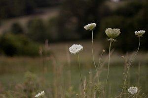 Wildflower Countryside