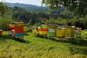 Wooden beehives in the forests